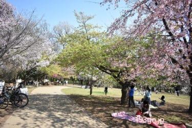 【吉祥寺・井の頭公園 花見2020】桜の開花!食べ歩きグルメをピックアップ