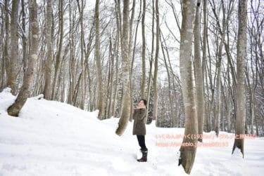 【新潟 松之山温泉】周辺観光 雪国、米どころ十日町市の絶景「美人林」「星峠の棚田」