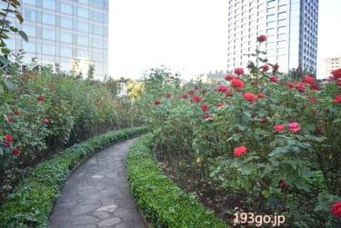 【ホテルニューオータニ】クラブラウンジがエントランス!3万輪の赤い薔薇の世界へ「Red Rose Garden」